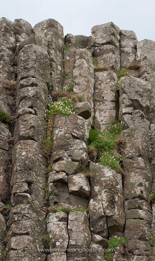 Quelques-unes des 40 000 colonnes basaltiques de la Chaussée des Géants, comté d'Antrim © Marie-Ange Ostré