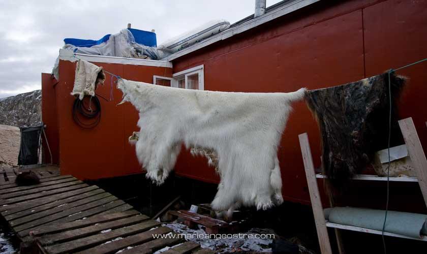 Groenland, peau d'ours blanc au village d'Aappilattoq au Nord © Marie-Ange Ostré