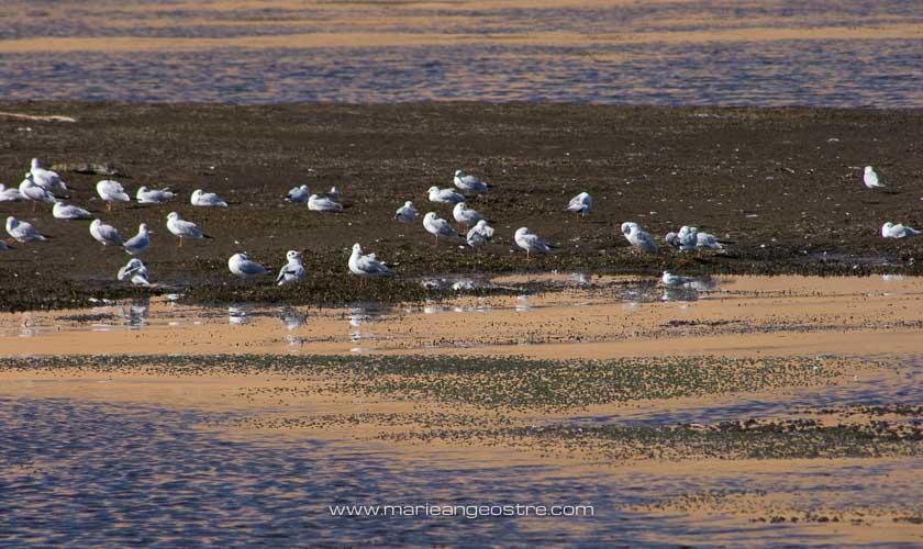 Egypte, oiseaux sur le Nil © Marie-Ange Ostré