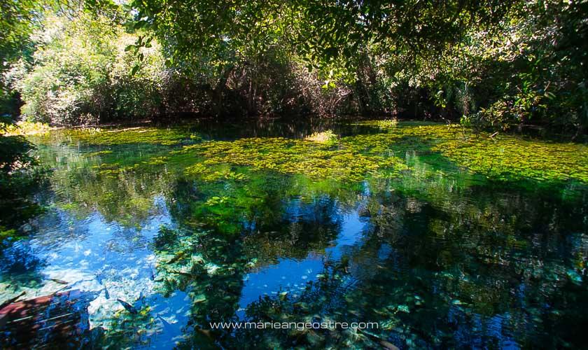 Brésil, rivière dans le Mato Grosso do Sul © Marie-Ange Ostré
