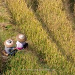 Chine, rizières en terrasses de Longji, Longsheng province du Guangxi © Marie-Ange Ostré