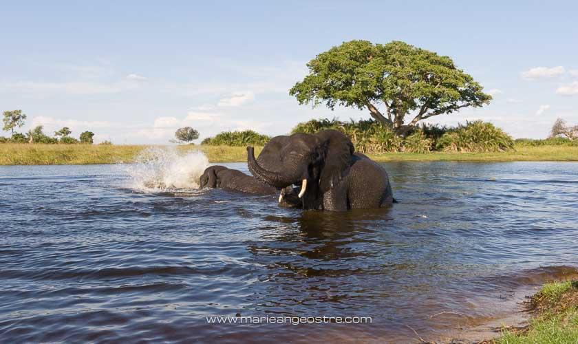 Botswana, le bain des éléphants dans l'Okavango © Marie-Ange Ostré