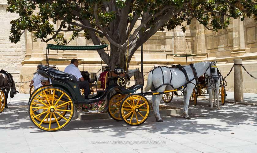 Espagne, cariole à chevaux devant la cathédrale de Séville © Marie-Ange Ostré