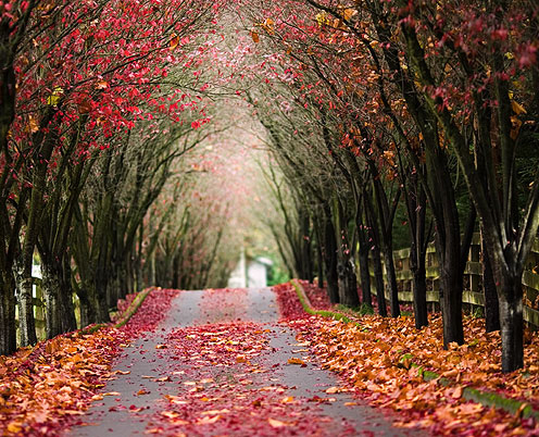Autumn Tree Tunnel, Wales