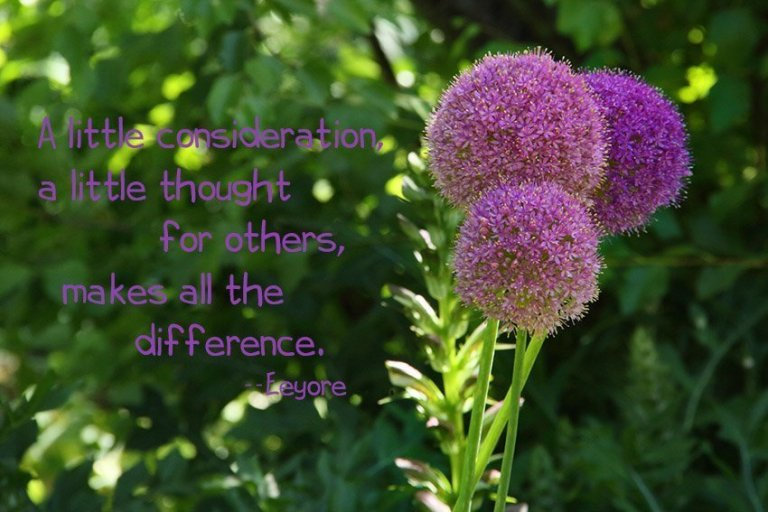 A little consideration, a little thought for others, makes all the difference. --Eeyore