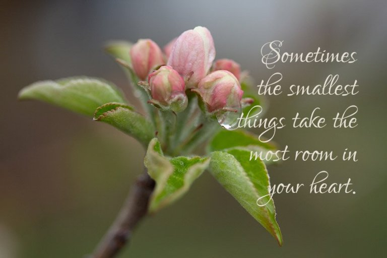 Sometimes the smallest things take the most room in your heart.