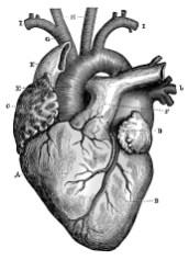Heart illustration, black and white