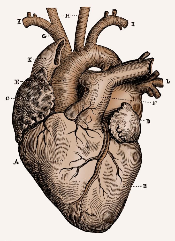 Heart illustration, sepia tone