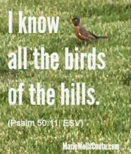 I know all the birds of the hills. Psalm 50:11