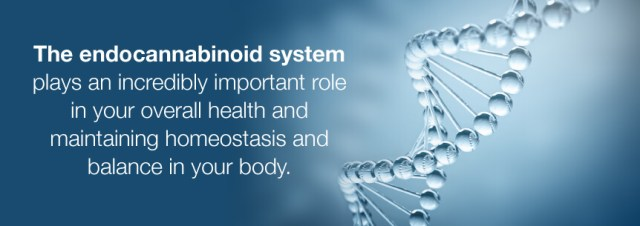 what is endocannabinoid system