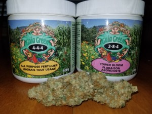Cannabis Bud with Gaia Green Nutrients