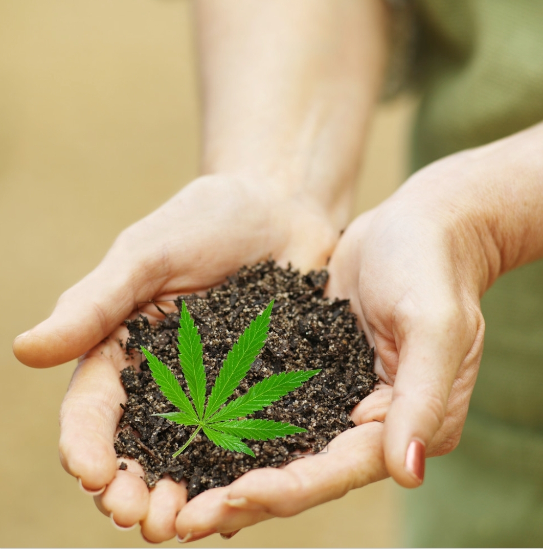 Composting for Your Cannabis Plants