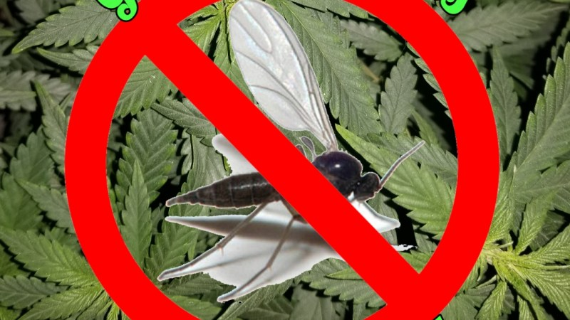 Get Rid of Fungus Gnats For Good!