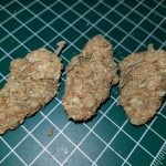 Properly dried and cured buds
