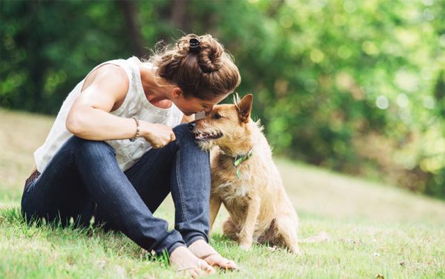 Can CBD Help Our Canine Companions? | The Marijuana Times