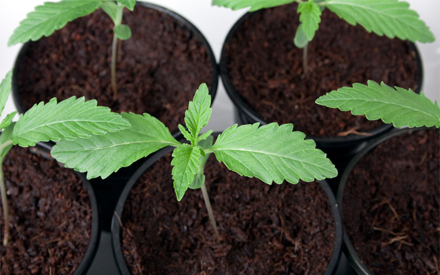 will-2017-be-the-year-of-the-institutional-investor-in-the-cannabis-industry