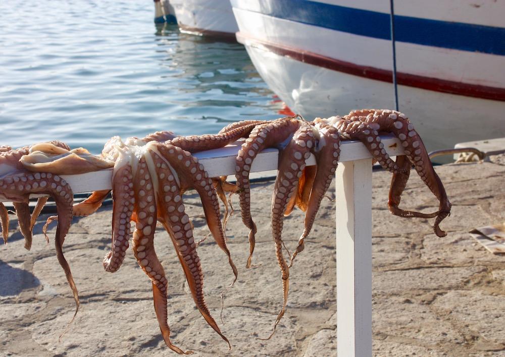 Greek Island Light - Octopus