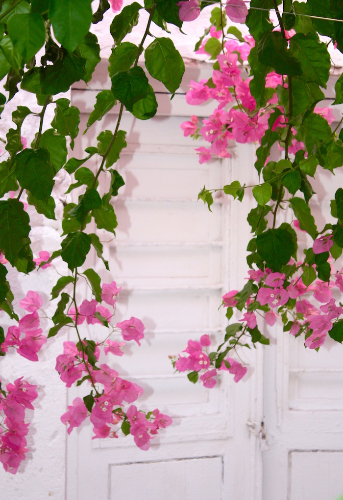 Doors of the Greek Islands - door with bougainvillea