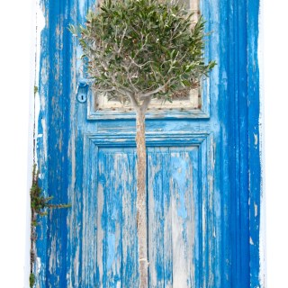 door with olive tree