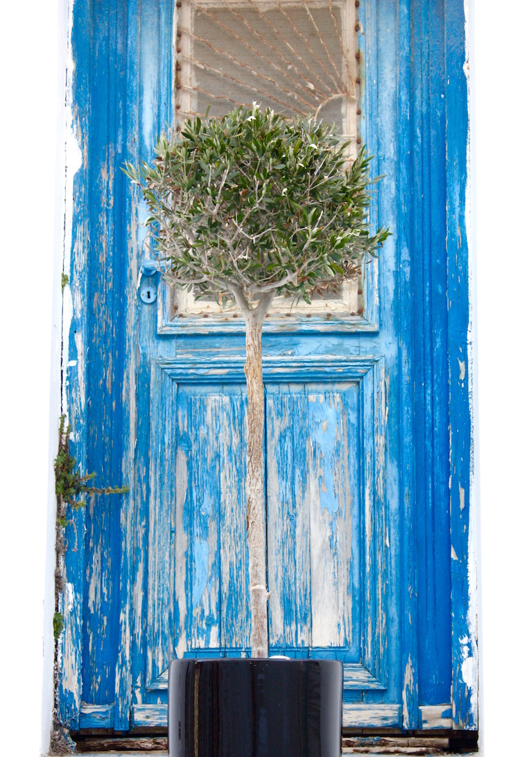 Doors of the Greek Islands - door with olive tree