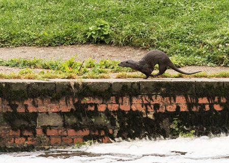Otter-2