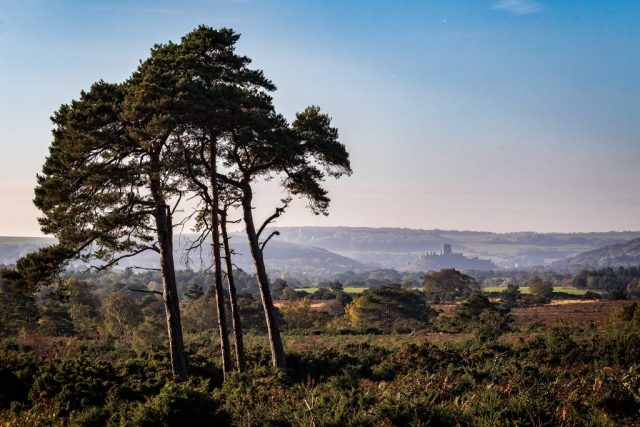 View over to Corfe Castle from Arne