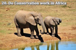 20 conservation africa