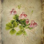 laminas decoupage de flores (3)