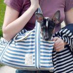 Bolsa transporta cachorros