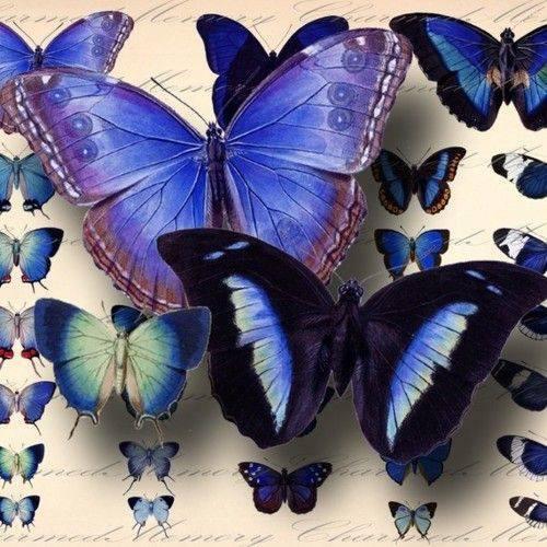 mariposas-decoupage-19