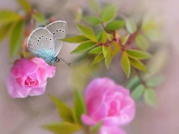 mariposas-decoupage-28