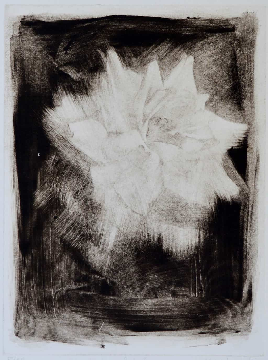 """""""Rose"""" - drawing of a rose on a black background. Original print drypoint by painter-printmaker Marina Kim"""