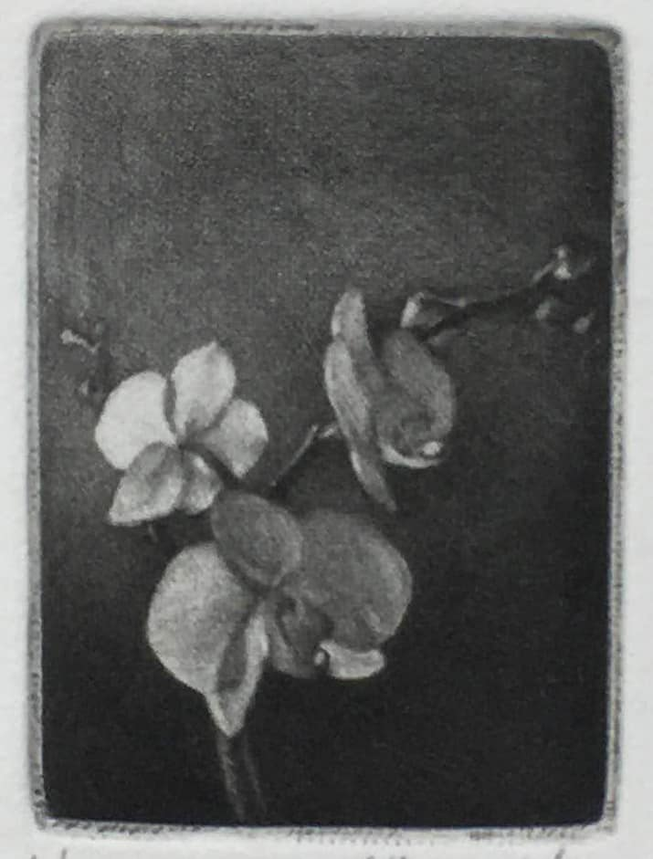 """""""Orchid"""" - black and white picture of an orchid flower. Original print mezzotint by painter-printmaker Marina Kim"""