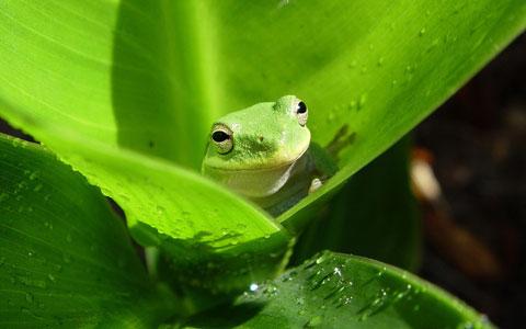 coloresverde