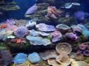 Afrique du Sud - Durban - Aquarium