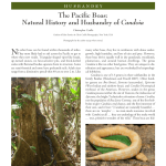 IRCF Reptiles & Amphibians, VOL15, NO 4, June 2012 Husbandry: The Pacific Boas: Natural History and Husbandry of Candoia Christopher Carille