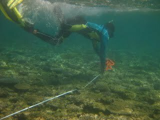 Taitusi laying a transect line