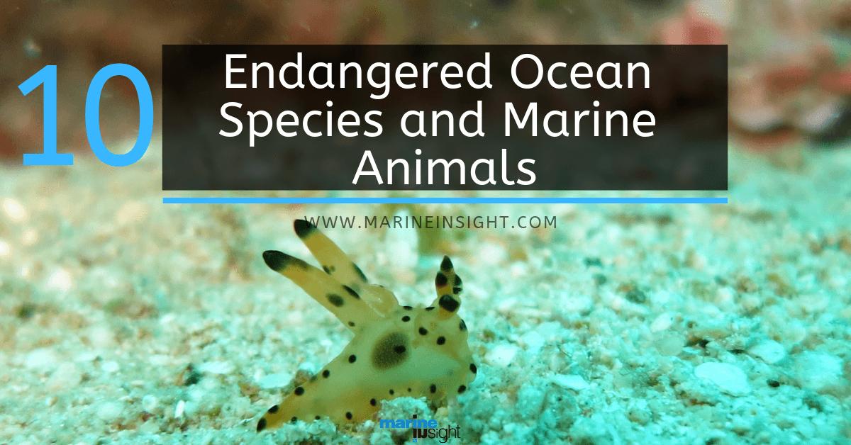 10 endangered ocean species