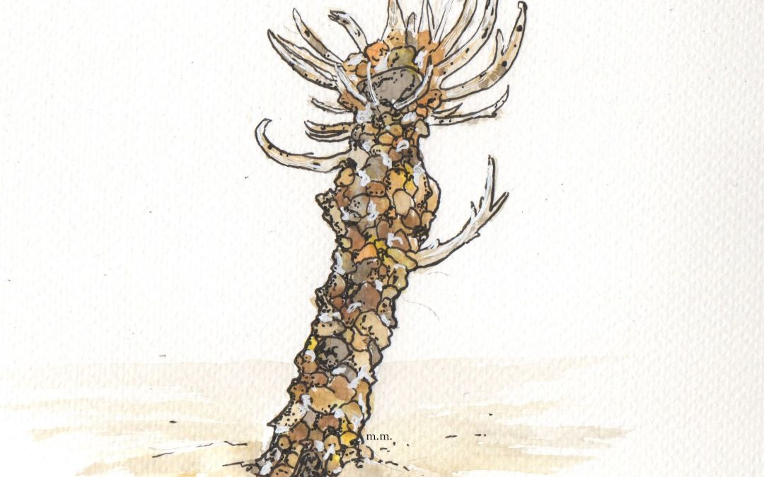 Lanice conchilega – Sand Mason