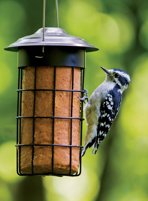 How to attract birds to your yard in summer
