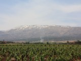 massaya vineyards in the Lebanon