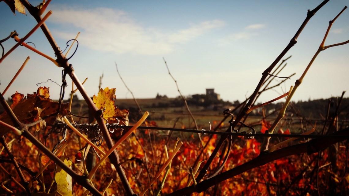 Les ruines de Châteauneuf du Pape à l'automne