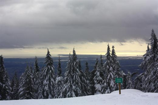 Trees in Grouse Mountain