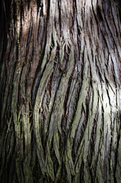 Photo of a trunk