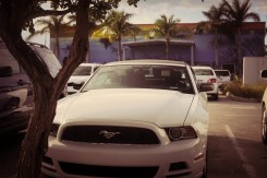 White Ferrari in Key West