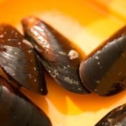 macaronade-au-poisson-de-sete (2 sur 38) (Large)