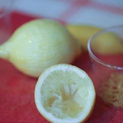 bûche-de-noël-praliné-citron-craquant-gavottes (18 of 26)