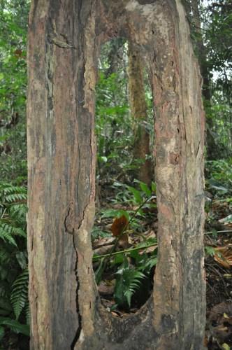 Khao Yai arbre 2