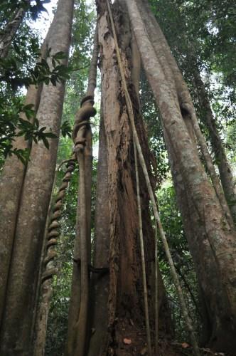 Khao Yai arbres