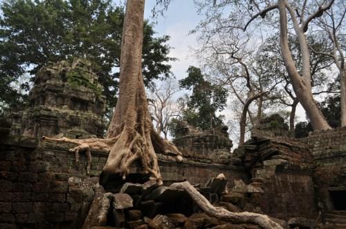 Angkor Ta Phrom 1